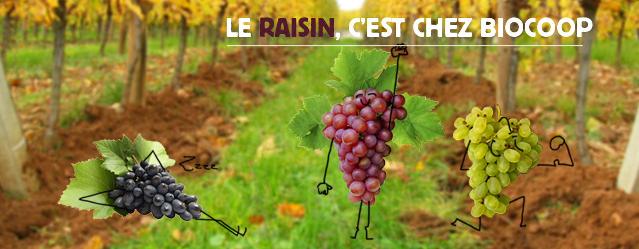 Le fruit du mois de septembre : le raisin